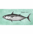 ink sketch of skipjack tuna vector image vector image