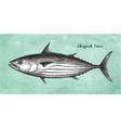 ink sketch skipjack tuna vector image vector image