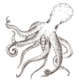 sea life octopus vector image