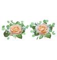 set watercolor beautiful roses vector image vector image