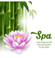 Spa background vector image vector image