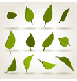 spring leaves set vector image vector image