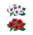 white and red flower bush petunia vector image