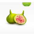 3d with whole green fig and half a vector image