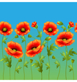 bright background with flowers curb poppy vector image vector image