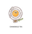cup chamomile herbal organic tea icon sketch vector image