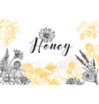 honey hand drawn banner template vector image