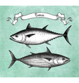 ink sketch of tuna vector image vector image