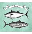 ink sketch tuna vector image vector image