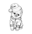 pomeranian toy dig dressed in hoodie and santa hat vector image vector image