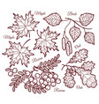 autumn leaf contour nature decoration vector image