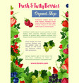 berries and fruits poster for farm shop vector image vector image