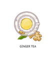 cup spicy ginger flavor tea icon sketch doodle vector image