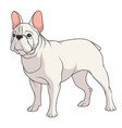 color a french bulldog vector image vector image