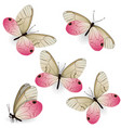 set pink realistic butterflies cithaerias vector image vector image