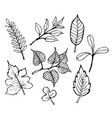 sketch of leaf design vector image vector image