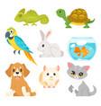 set of home animal pet vector image