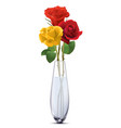 colored roses in a glass vase isolated realistic vector image