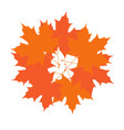 group of autumn leaves vector image vector image