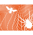 Spider and fly vector image