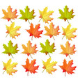 autumn leaves pattern realistic on white vector image vector image