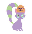 happy halloween celebration cat with pumpkin in vector image