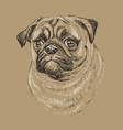monochrome pug hand drawing portrait vector image vector image