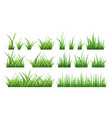 nature green field grass vector image