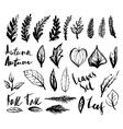 Doodle leaves set vector image