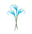 Blue Anthurium Bouquet or Flamingo Bouquet vector image vector image