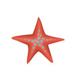 bright red starfish or sea star with blue spots vector image