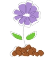 Cornflower drawing vector image vector image