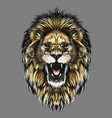 hand drawn sketch of lion head in color isolated vector image