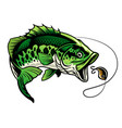 bass fish catcing fishing lure vector image vector image