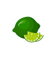 cartoon fresh lime isolated on white background vector image vector image