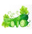cucumbers vector image