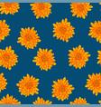 yellow chrysanthemum on indigo blue background vector image vector image
