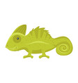 animal pet - green chameleon vector image