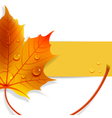banner with a maple leaf vector image