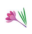 elegance purple crocus flower vector image vector image