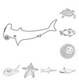 isolated object of sea and animal symbol vector image vector image