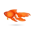 Goldfish isolated on white Small red aquarium vector image vector image