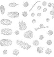 hand drawn pine cones vector image