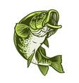 largemouth bass fish vector image vector image