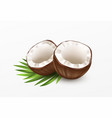 sliced coconut isolated on white background vector image