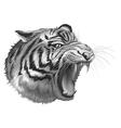 A grey tiger roaring vector image vector image