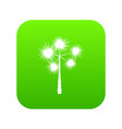 palm chamaerops icon digital green vector image vector image