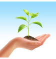plant in hand vector image