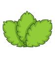 sage herb icon cartoon style vector image