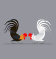 cockfighting vector image